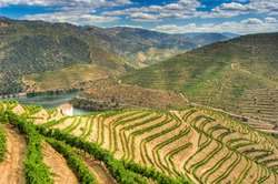 Bliss and Romance in Douro Valley